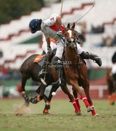 Hurlingham And Palermo Playoffs: #007769