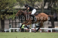 Ellerstina vs. Alegria: #037532