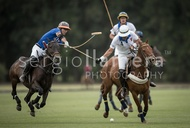 All Pro Polo League