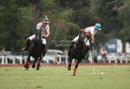 Hurlingham And Palermo Playoffs: #007764