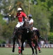 Hurlingham And Palermo Playoffs / Alegria vs. La Baronesa