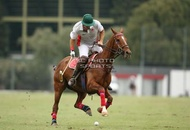 Hurlingham And Palermo Playoffs: #007766